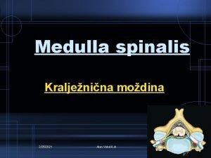 Medulla spinalis Kraljenina modina 2252021 Alen Vukeli dr