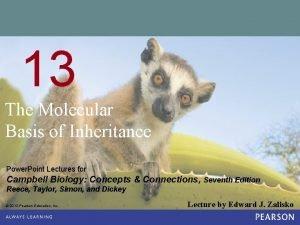 13 The Molecular Basis of Inheritance Power Point