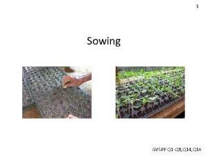 1 Sowing GVSPP Q 1 Q 8 Q