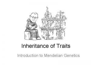 Inheritance of Traits Introduction to Mendelian Genetics A