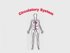 What is the circulatory system The circulatory system