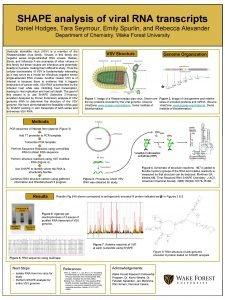 SHAPE analysis of viral RNA transcripts Daniel Hodges