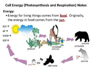Cell Energy Photosynthesis and Respiration Notes Energy Energy
