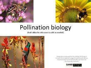 Pollination biology draft slides for educators to edit