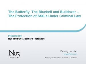 The Butterfly The Bluebell and Bulldozer The Protection