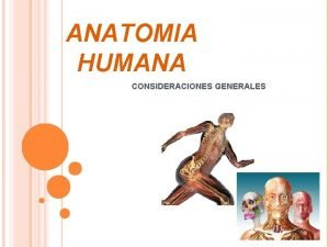ANATOMIA HUMANA CONSIDERACIONES GENERALES ANATOMIA DESCRIPTIVA FUNCIONAL TOPOGRAFICA