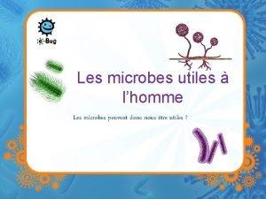 Les microbes utiles lhomme Les microbes peuvent donc