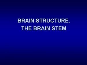 BRAIN STRUCTURE THE BRAIN STEM Nervous System CNS