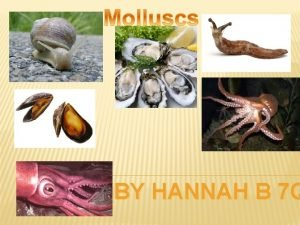 BY HANNAH B 7 Q The word snail