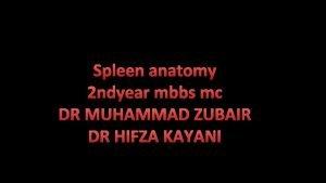 Spleen anatomy 2 ndyear mbbs mc DR MUHAMMAD