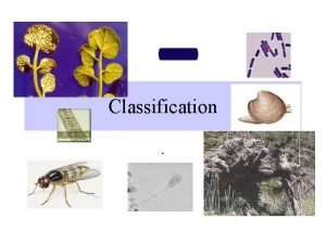 Classification 17 1 The Linnaean System of Classification