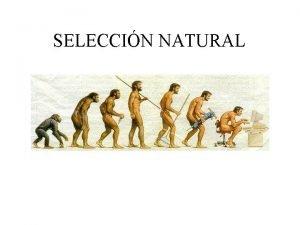 SELECCIN NATURAL Seleccin Natural Selection It is a