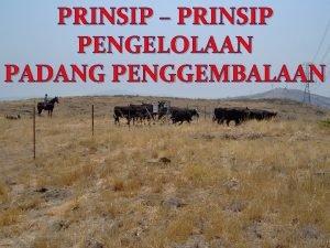 PRINSIP PRINSIP PENGELOLAAN PADANG PENGGEMBALAAN Prinsipprinsip pengelolaan padang