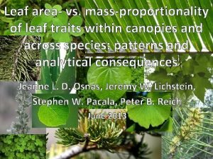 Leaf area vs massproportionality of leaf traits within