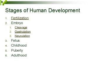 Stages of Human Development 1 2 Fertilization Embryo