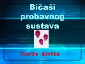 Biai probavnog sustava Giardia lamblia alen vukeli dr