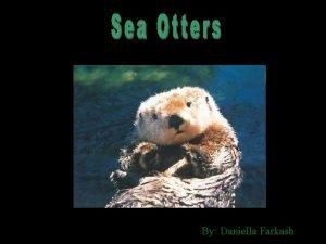 By Daniella Farkash Sea otters have a small