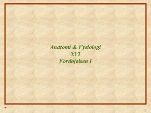 Anatomi Fysiologi XVI Fordjelsen I 1 Anatomi Fysiologi