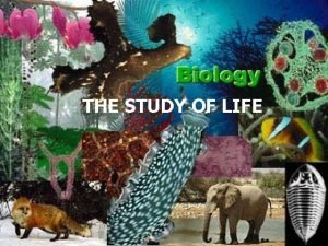 THE STUDY OF LIFE What is Biology Biology