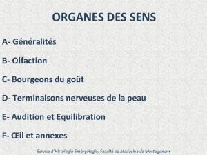 ORGANES DES SENS A Gnralits B Olfaction C