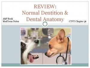 AP Book Med Term Notes REVIEW Normal Dentition