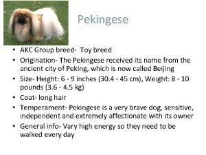 Pekingese AKC Group breed Toy breed Origination The