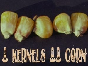 1 The Kernel of Forgiveness 2 The Kernel