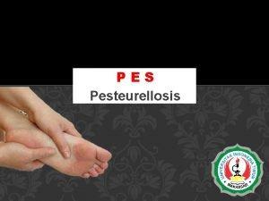PES Pesteurellosis APA ITU PES Pes atau yang