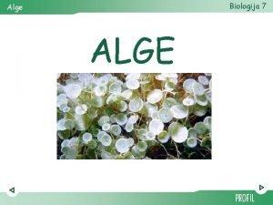 Biologija 7 Alge ALGE Biologija 7 Alge autotrofni