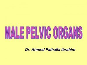 Dr Ahmed Fathalla Ibrahim VAS DEFERENS VAS DEFERENS