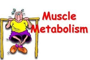 Muscle Metabolism Muscle Metabolism Muscles need a constant