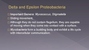 Delta and Epsilon Proteobacteria Important Genera Myxococcus Stigmatella