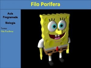 Filo Porifera Aula Programada Biologia Tema Filo Porifera