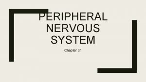 PERIPHERAL NERVOUS SYSTEM Chapter 31 Two Major Divisions