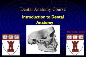 Dental Anatomy Course Introduction to Dental Anatomy Msd