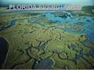 FLORIDA EVERGLADES The Everglades l The Everglades and