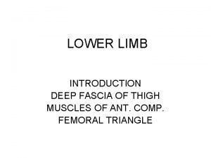 LOWER LIMB INTRODUCTION DEEP FASCIA OF THIGH MUSCLES
