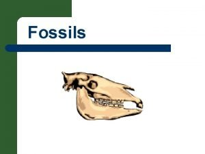 Fossils Fossils Remains Imprints Traces or Evidence of