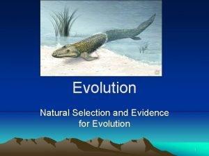 Evolution Natural Selection and Evidence for Evolution 1