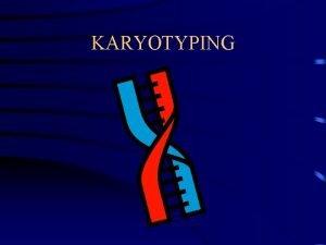KARYOTYPING What is a karyotype A karyotype is
