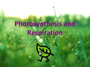 Photosynthesis and Respiration What is photosynthesis A chemical
