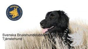 Svenska Brukshundklubben Tjnstehund Om Svenska Brukshundklubben Visionen Svenska