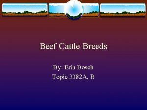 Beef Cattle Breeds By Erin Bosch Topic 3082