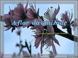 A flor da amizade Lady Foppa Poeta Goiana
