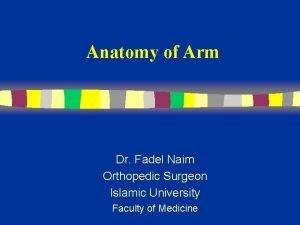 Anatomy of Arm Dr Fadel Naim Orthopedic Surgeon