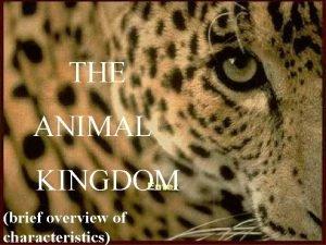 THE ANIMAL KINGDOM brief overview of characteristics Characteristics