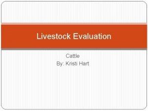 Livestock Evaluation Cattle By Kristi Hart Livestock Evaluation