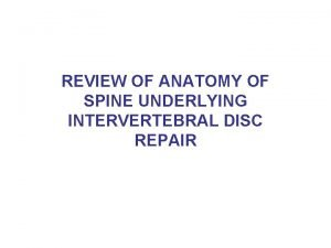 REVIEW OF ANATOMY OF SPINE UNDERLYING INTERVERTEBRAL DISC