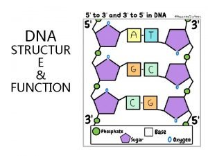 DNA STRUCTUR E FUNCTION DNA stands for Deoxyribo