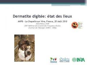 Dermatite digite tat des lieux ANPB La Chapelle